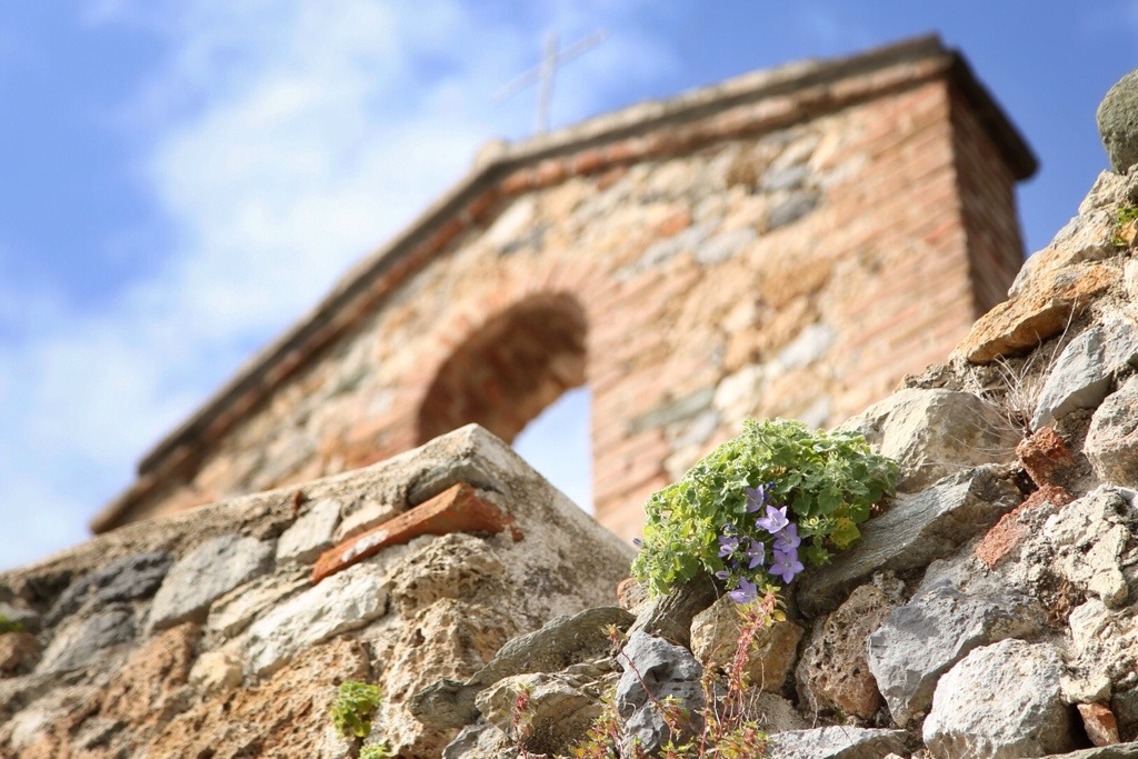 fiore Campanula di Finale sulla Chiesa di San Lorenzo