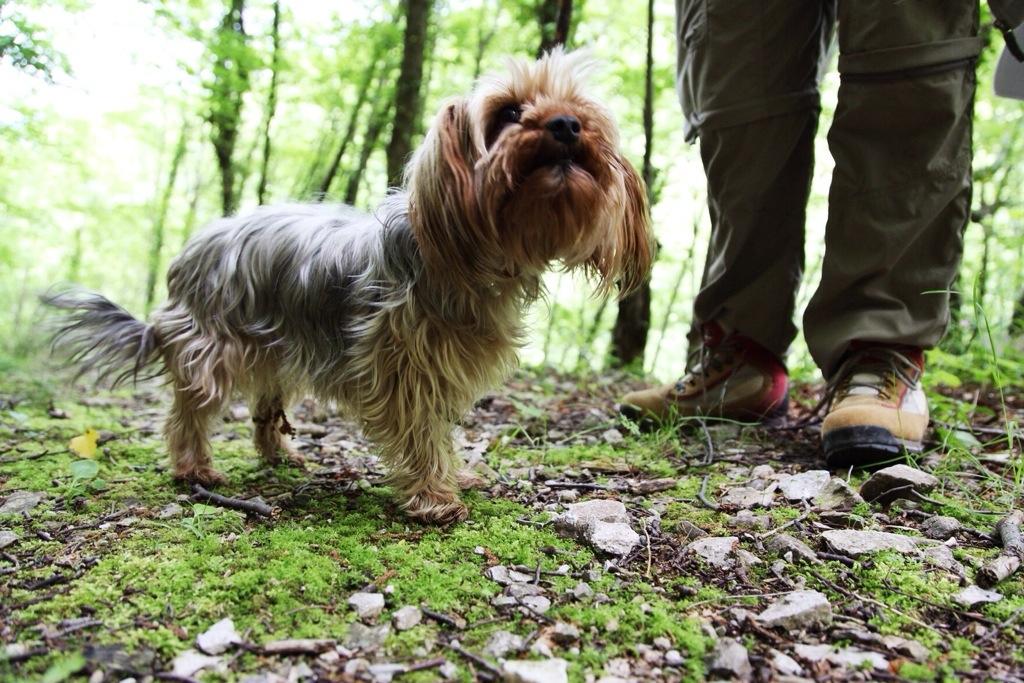 fare trekking col proprio cane in Liguria, Val Pennavaire