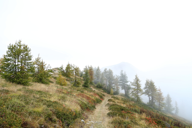 Verso il bosco, tra le nuvole