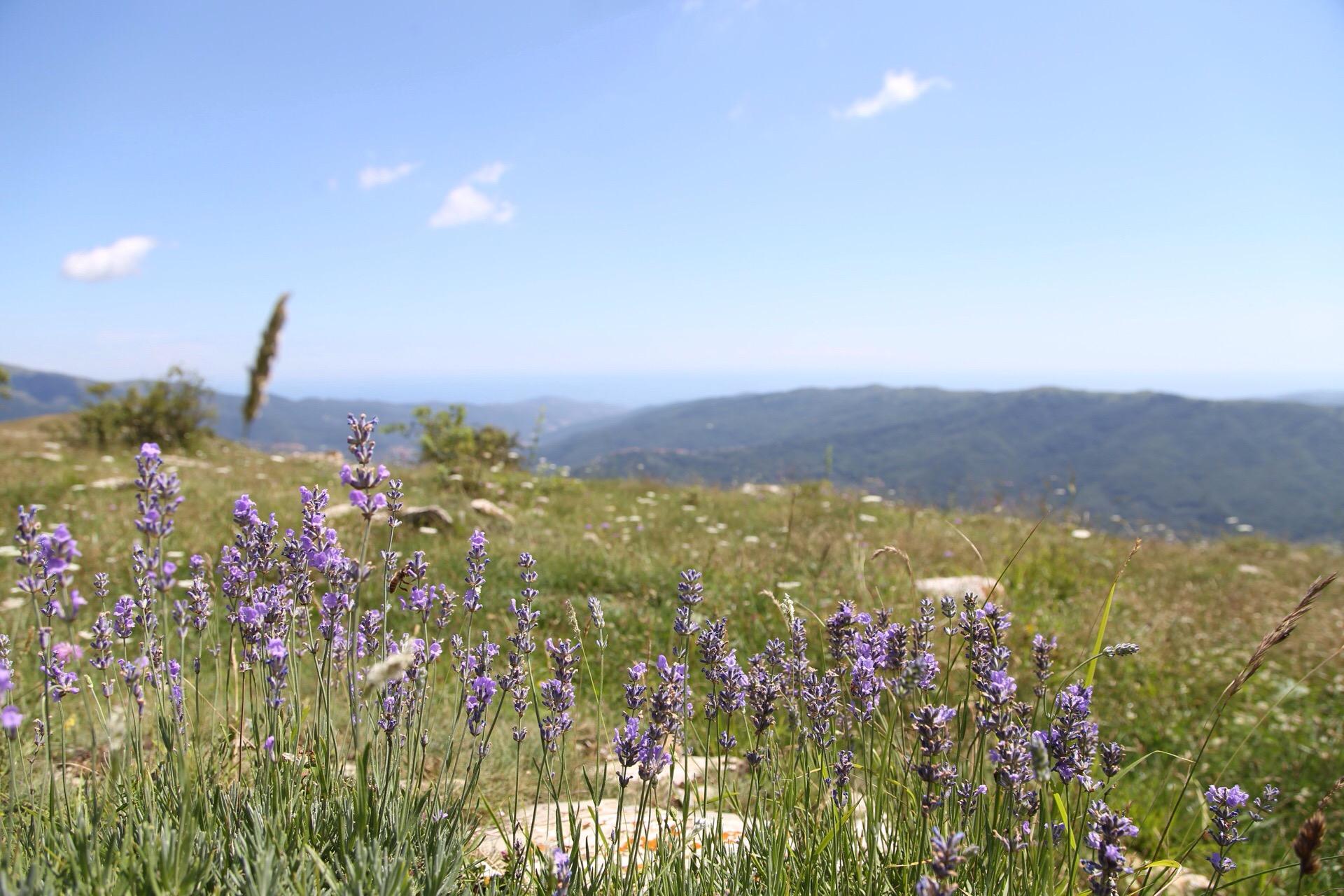 Vista dal Monte Guardiabella